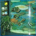 akvarioj